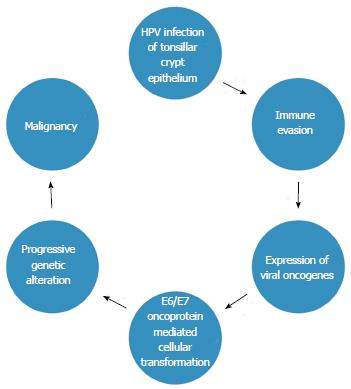 Figure 2 Proposed Theory Of Human Papillomavirus Related Carcinogenesis HPV