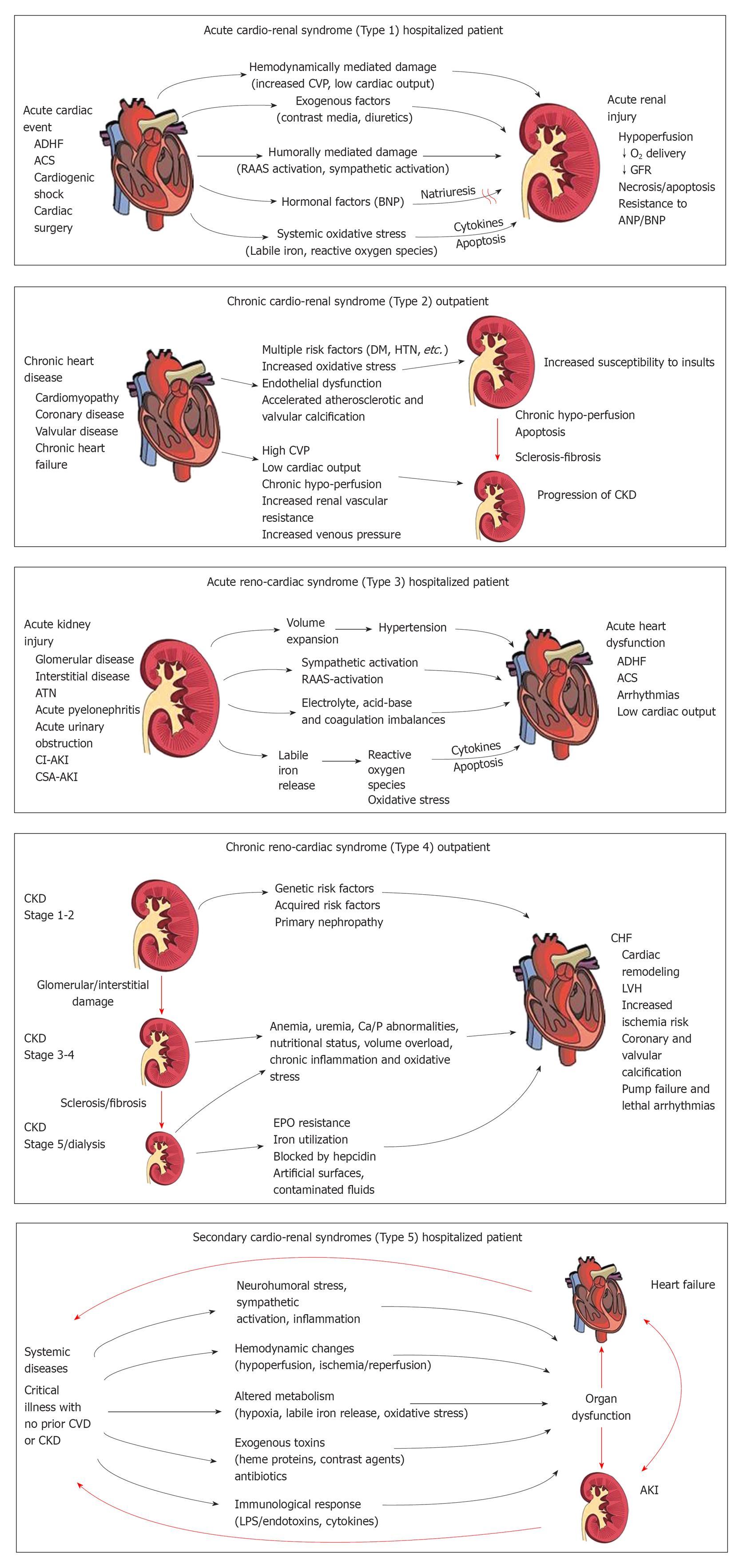 Cardiorenal syndromes
