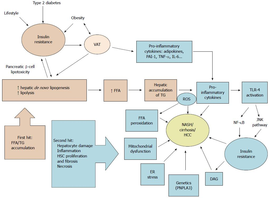 Endocrine causes of nonalcoholic fatty liver disease figure 2 schematic summary of nonalcoholic fatty liver disease pathophysiology according to the two hit hypothesis vat visceral adipose tissue ccuart Gallery