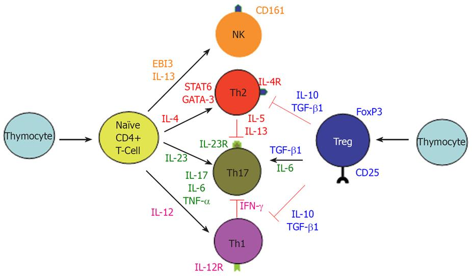 Immunopathogenesis Of Inflammatory Bowel Disease