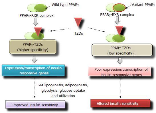 Pharmacogenetic studies update in type 2 diabetes mellitus