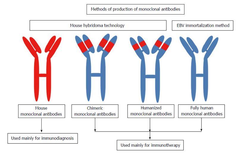 Monoclonal antibodies: Principles and applications of ...