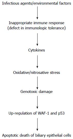 Pathogenic Role Of Oxidative And Nitrosative Stress In Primary