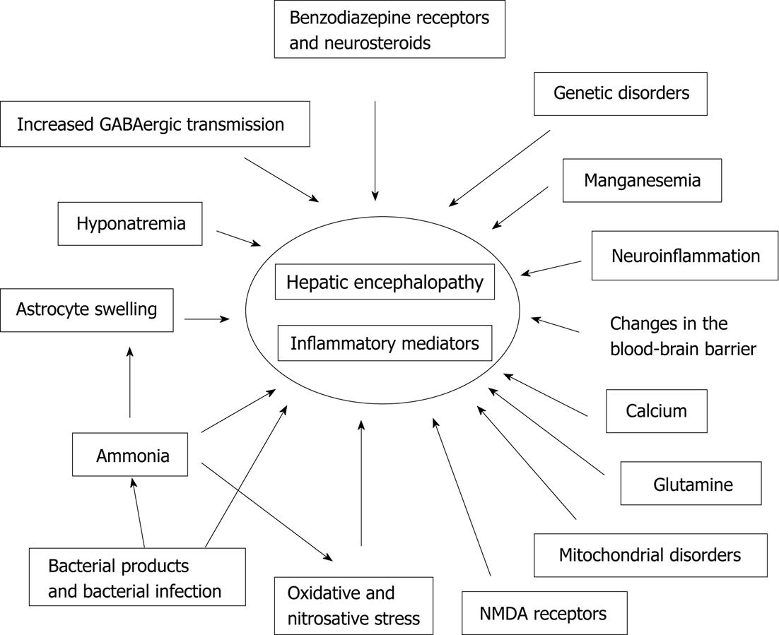 Current Pathogenetic Aspects Of Hepatic Encephalopathy And