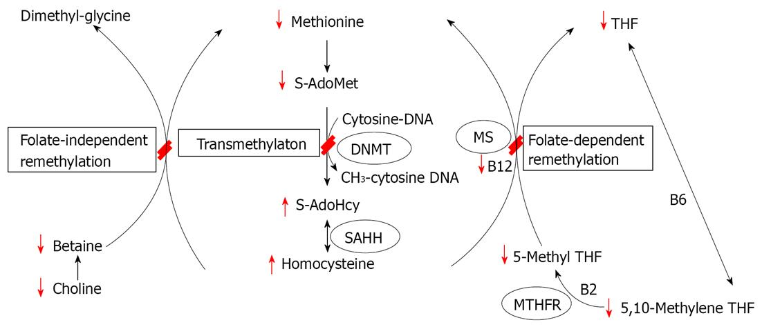 Methylthioadenosine nucleosidase are enzymes that catalyse the hydrolytic deadenylation reaction of 5methylthioadenosine and Sadenosylhomocysteine It is also regarded as an important target for antibacterial drug discovery because it is important in the metabolic system of bacteria and only produced by bacteria Given the different distance between nitrogen atom of adenine and the ribose