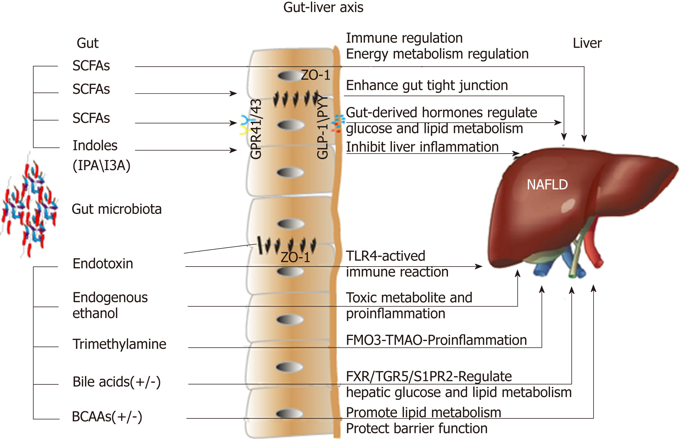Microbial metabolites in non-alcoholic fatty liver disease