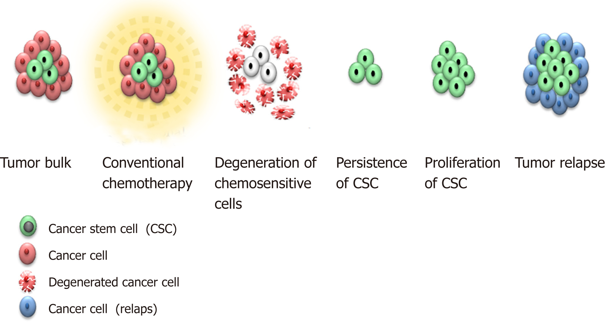 Presence And Role Of Stem Cells In Ovarian Cancer