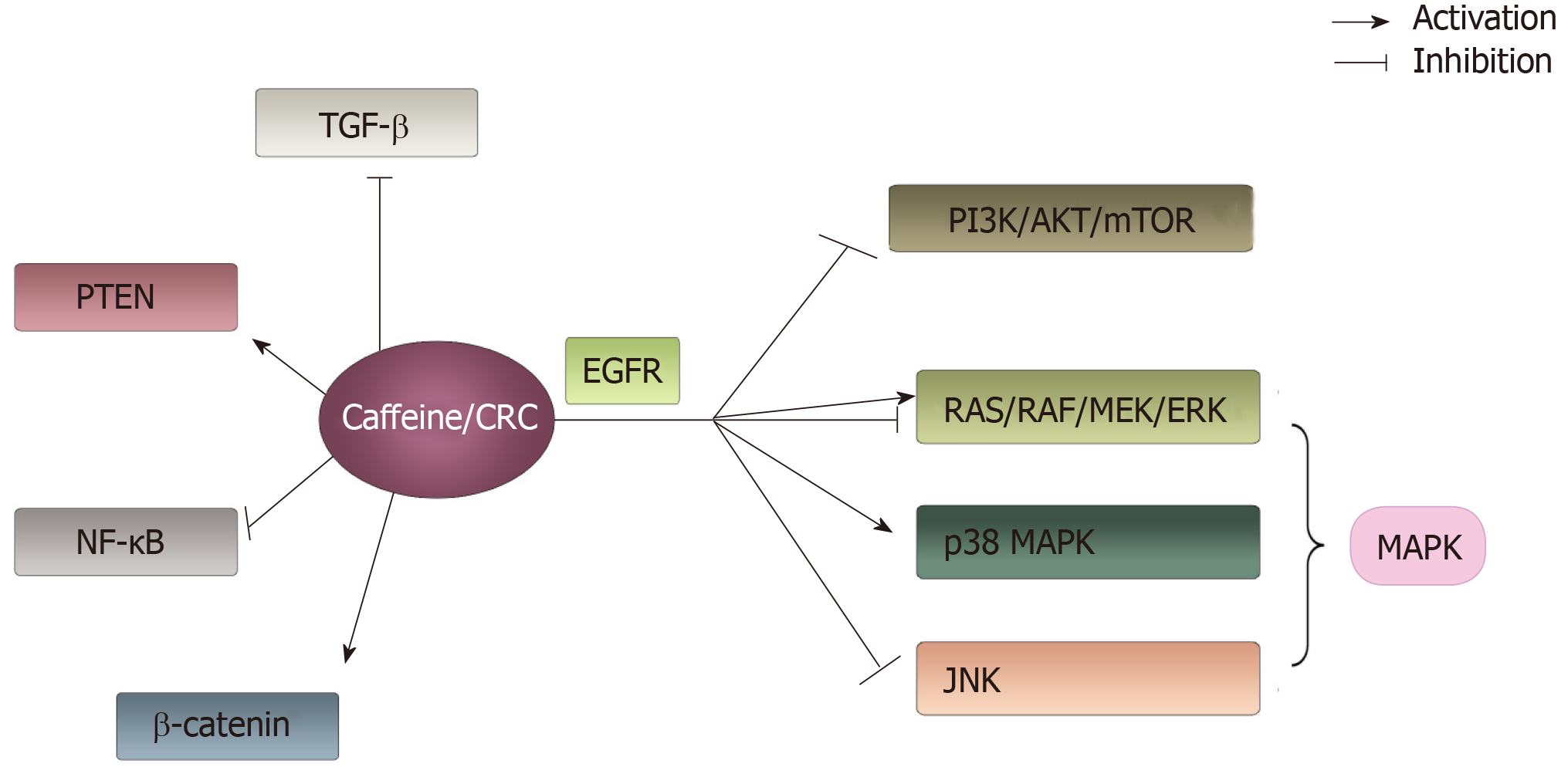 Caffeine And Its Main Targets Of Colorectal Cancer