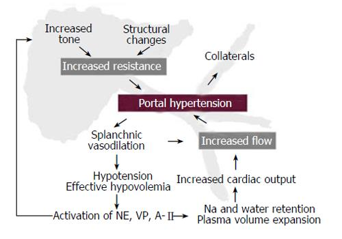 Portal Hypertension Pathophysiology 81320 | MEDIABIN