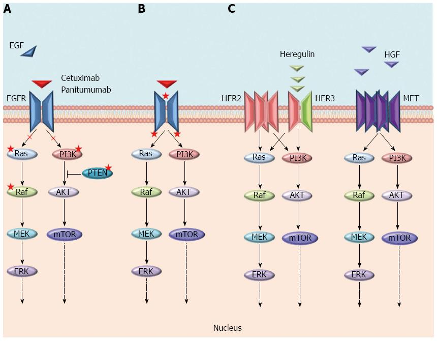 Mechanisms Of Resistance To Anti Epidermal Growth Factor Receptor Inhibitors In Metastatic Colorectal Cancer