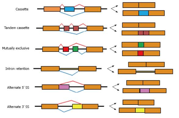 alternative splicing Alternative splicing (as) is a post-transcriptional regulatory mechanism for gene expression regulation splicing decisions are affected by the combinatorial behavior of different splicing factors that bind to multiple binding sites in exons and introns.