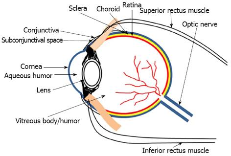 Ocular Drug Delivery Systems An Overview