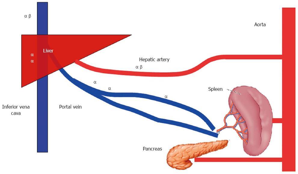 WJG 22 1582 g004 modulation of splanchnic circulation role in perioperative