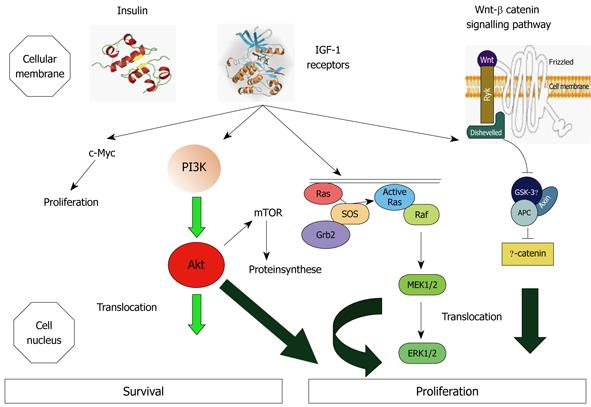 Is Diabetes A Causal Agent For Colorectal Cancer Pathophysiological And Molecular Mechanisms