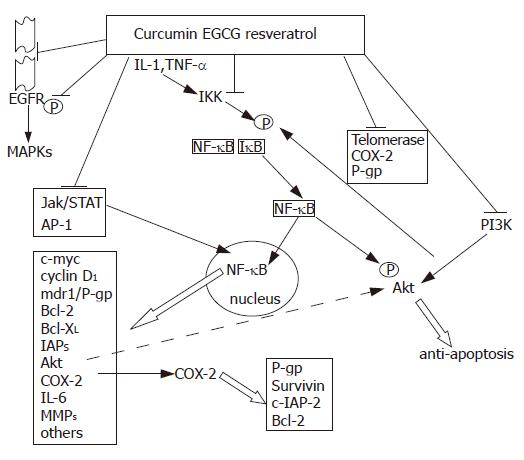 Multifactorial Nature Of Hepatocellular Carcinoma Drug Resistance
